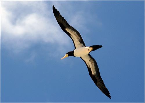 Птица в полете, летящая птицы, Фото фотография картинка
