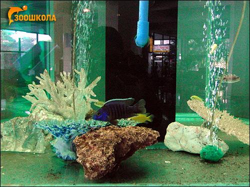 Морской аквариум, Фото фотография