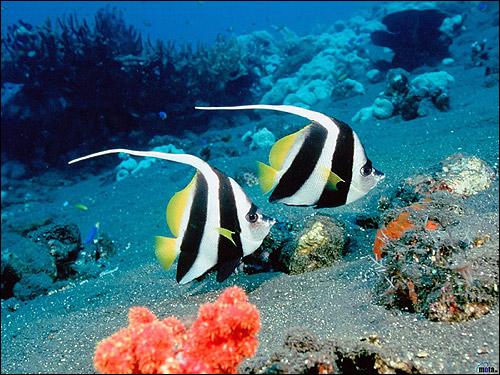 Морские рыбки, Фото фотография