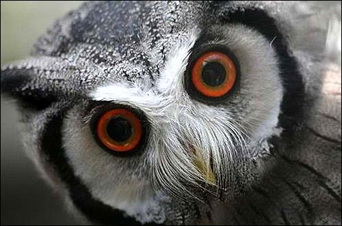 Хищная птица, Фото фотография картинка